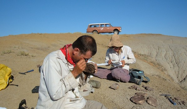 Scott Wing examines plant fossils in the Bighorn Basin