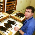Kristofer Helgen in the Natural History Museum with several bat specimens on trays