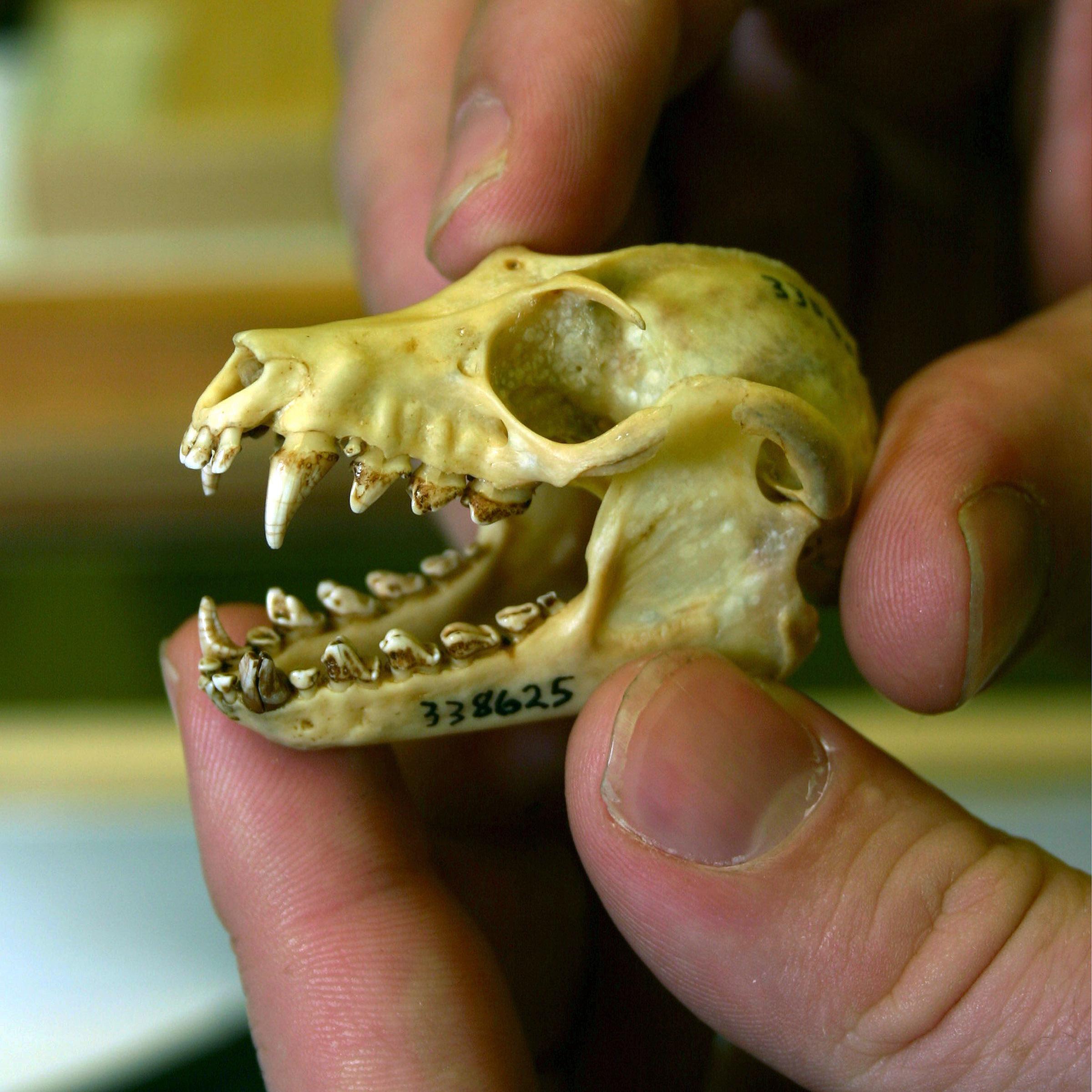 skull - Smithsonian Insider | Smithsonian Insider