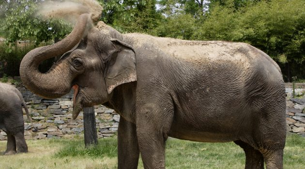 Asian elephant journey: Calgary to National Zoo