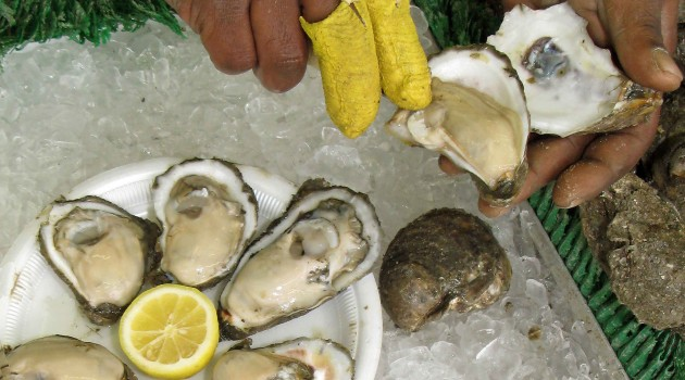 Rising acidification of estuary waters spells trouble for Chesapeake Bay oysters