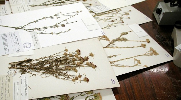 Namibian specimens come to the herbarium of the National Museum of Natural History
