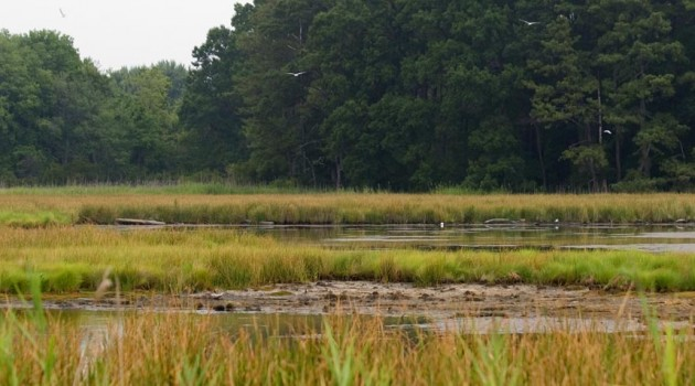 Smithsonian to lead study on degradation of nearshore coastal habitats of the Chesapeake