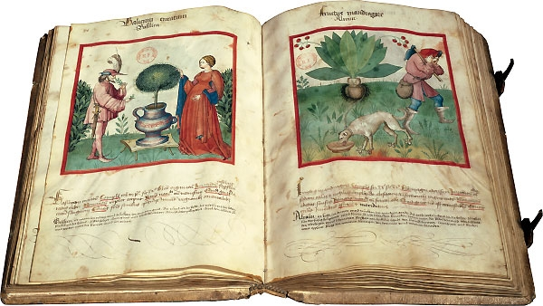 Medieval book is important resource for how plants were once collected, treated and used