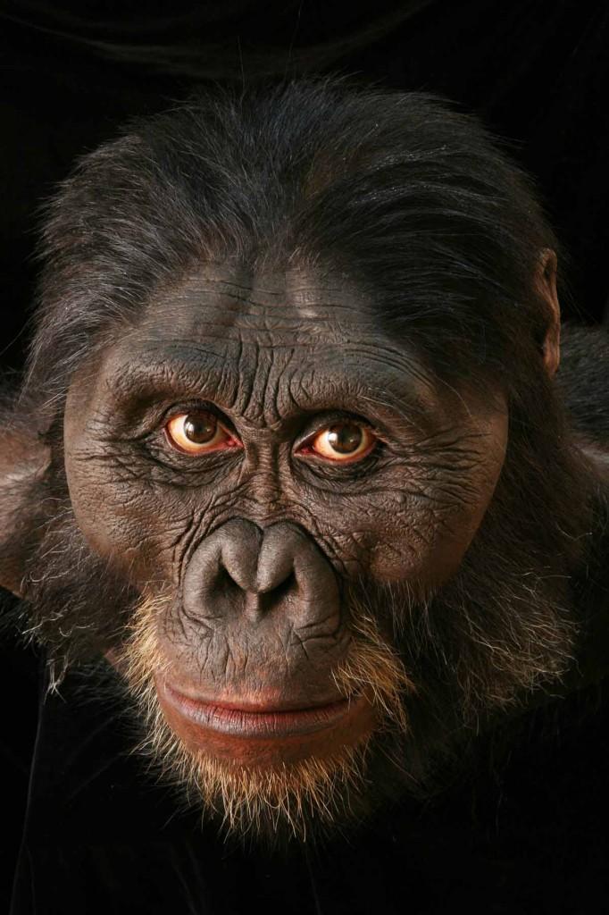 A bust of Australopithecus afarensis by John Gurche.