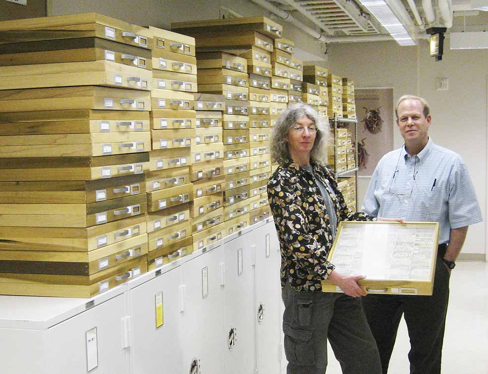 Entomologists Natalia Vandenburg and Dave Furth at the National Museum of Natural History with dozens of wooden drawers containing bark beetle specimens donated by Stephen L. Wood.