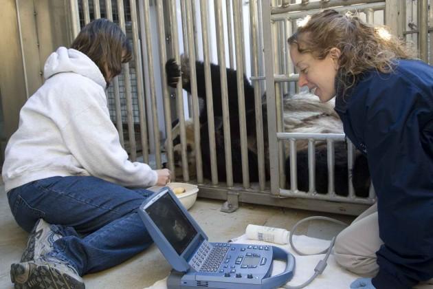 Panda ultrasound