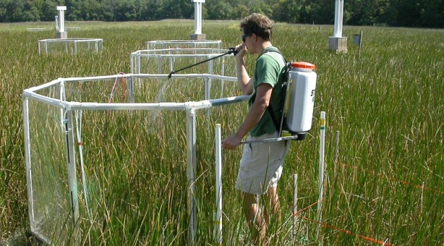 Scientists find excess nitrogen favors plants that respond poorly to rising CO2