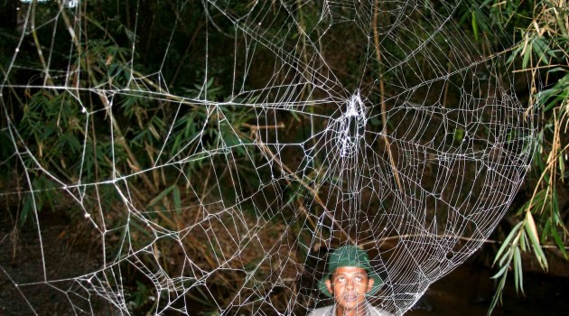 Image left: A large C. darwini web over a stream in Madagascar. (Photo by Matjaz Kuntner)