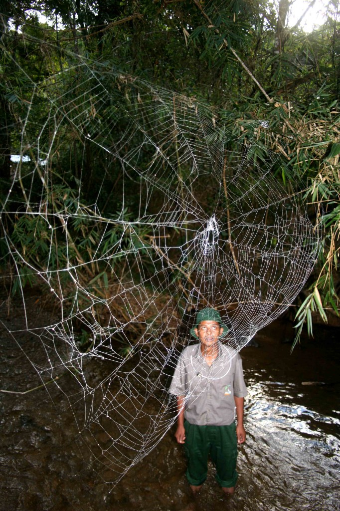 man looking at large spider web over river