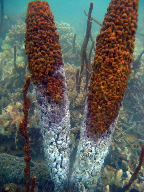 sponges showing damage from rising water temperature