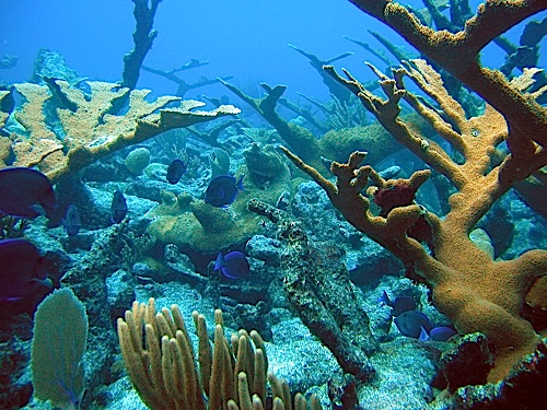 Healthy_Coral_Reef-NOAA