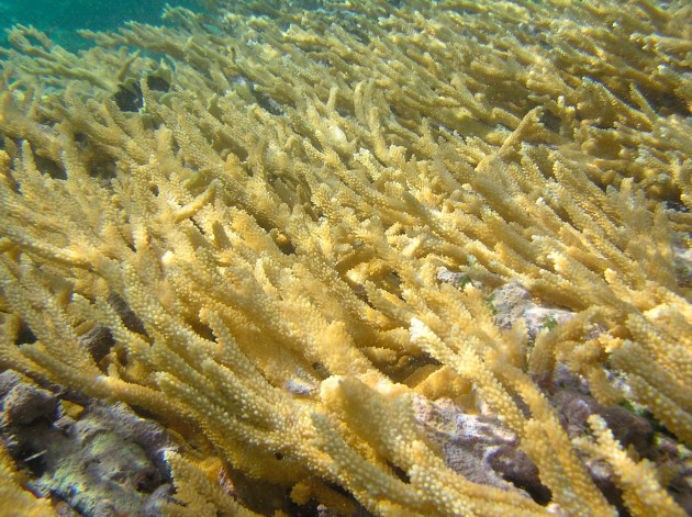 Healthy coral reefs. Photos courtesy NOAA