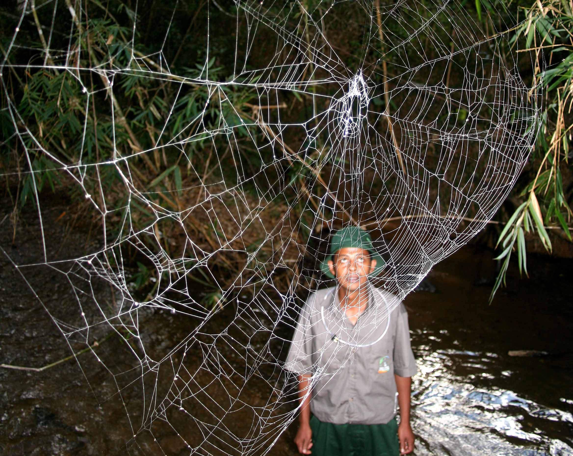 man looking at a spider web