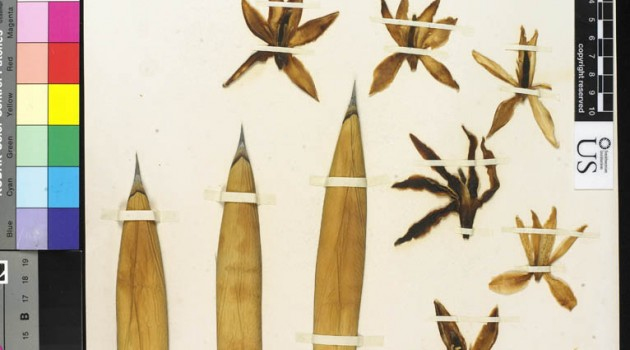 Remarkable ethnobotany collections of Edward Palmer highlighted in new Smithsonian Website