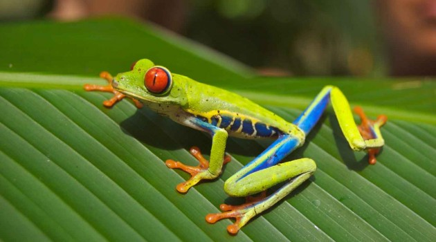 Scientists turn to social networking and citizen scientists to help keep track of amphibians