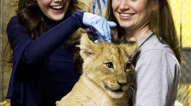 """Zoo lion cub named """"Aslan"""" by actors Georgie Henley and Skandar Keynes"""