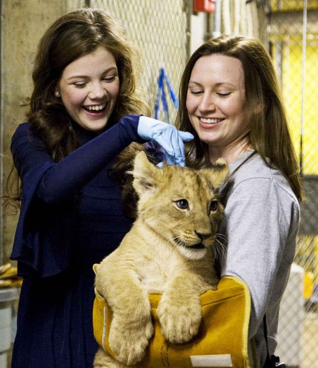 "National Zoo lion keeper Rebecca Stites, at right in photo, was joined by Georgie Henley, at left in photo, and Skandar Keynes, actors in the new motion picture ""Chronicles of Narnia: The Voyage of the Dawn Treader,"" on Dec. 9  to name one of  seven African lion cubs now living at the Zoo.  The male cub was named ""Aslan,"" after the great lion who is the central character in The Chronicles of Narnia series of novels by C.S. Lewis. (Photo by Mehgan Murphy)"