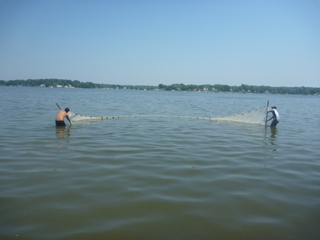 Image left: Smithsonian researchers sein for shrimp on the Rhode River.
