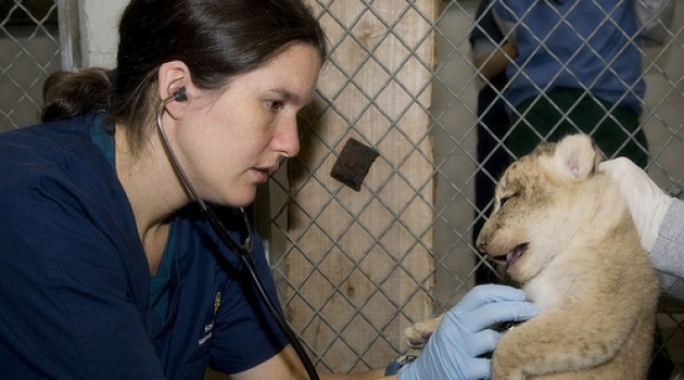National Zoo veterinarian Katharine Hope is in charge of the health of 2,000 animals from 400 different species.