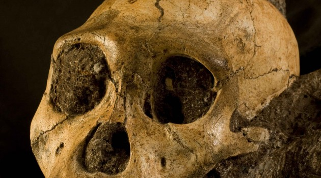 Skeletal casts of early hominin ancestor from Africa donated to National Museum of Natural History