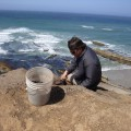 Torben Rick, Department of Anthropology, National Museum of Natural History excavating an archaeological site on Santa Rosa Island