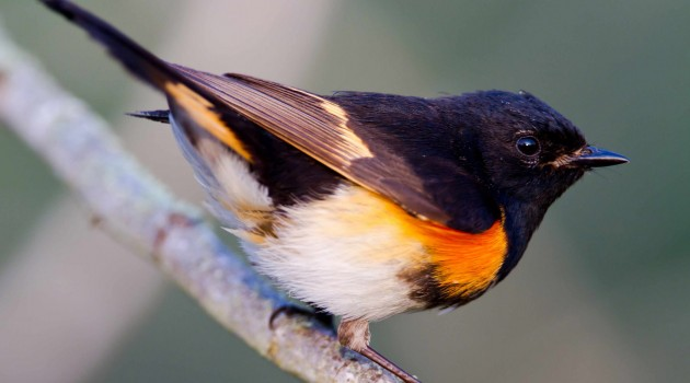 Smithsonian scientists find declining rainfall is a major influence for migrating birds