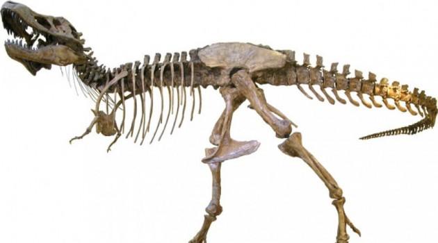 Tyrannosaurus rex more hyena than lion