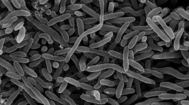 New bacteria genome may help solve mystery of how methylmercury is made
