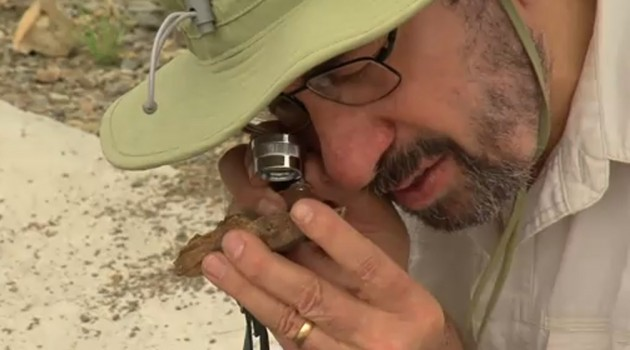Video: On the hunt for 251-million-year-old insects in South Africa