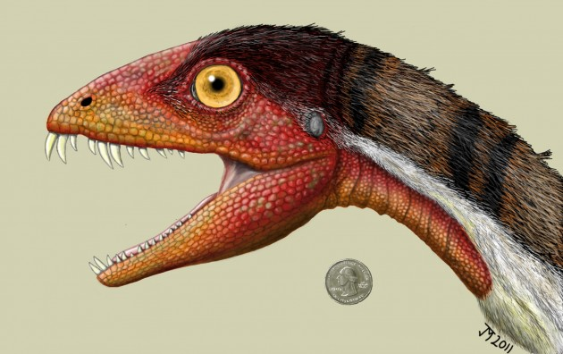 "This rendering of Daemonosaurus chauliodus by Jeffrey Martzshows its size relative to an American quarter. The species name chauliodus is derived from the Greek word for ""buck-toothed"" and refers to the species' big slanted front teeth."
