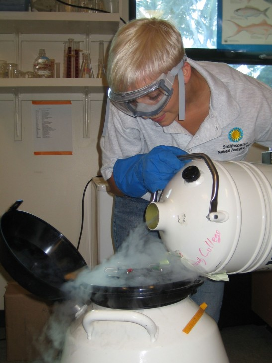 National Zoological Park Biotechnician Ginnie Carter refills a coral cryobank with liquid nitrogen. (Photo by: Jim Daniels)