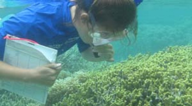 National Museum of Natural History's coral collection used in Caribbean agricultural and sewage pollution study