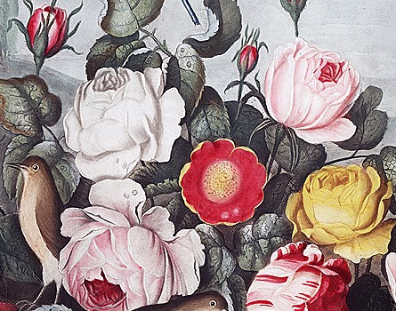 National Rose Month image from Smithsonian Institution Libraries