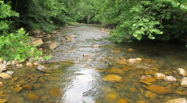 Image left: This cool mountain stream in southwest Virginia is prime habitat for the eastern hellbender.