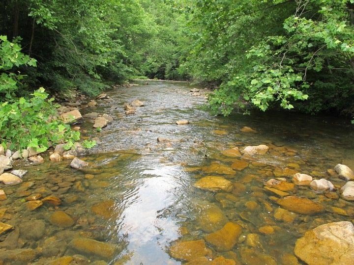 This stream in southwest Virginia is prime habitat in which to find