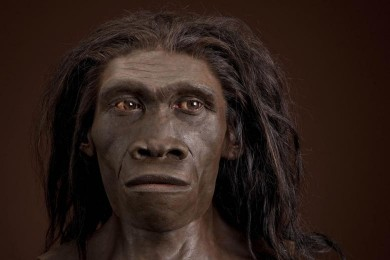 A lifelike bust of Homo erectus at the Smithsonian's National Museum of Natural History. Artist: John Gurche. Photo: Chip Clark.
