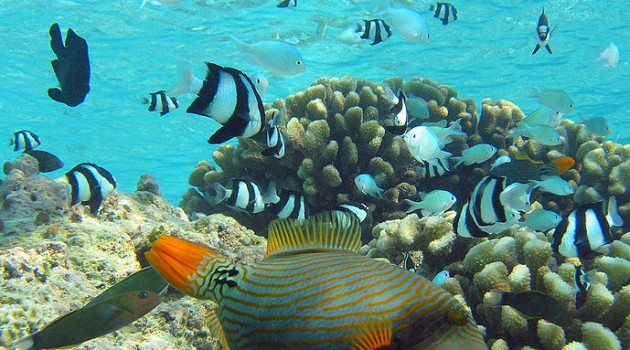 Ability to raft with flotsam and use non-reef habitats helps tropical fish journey to new places, study finds