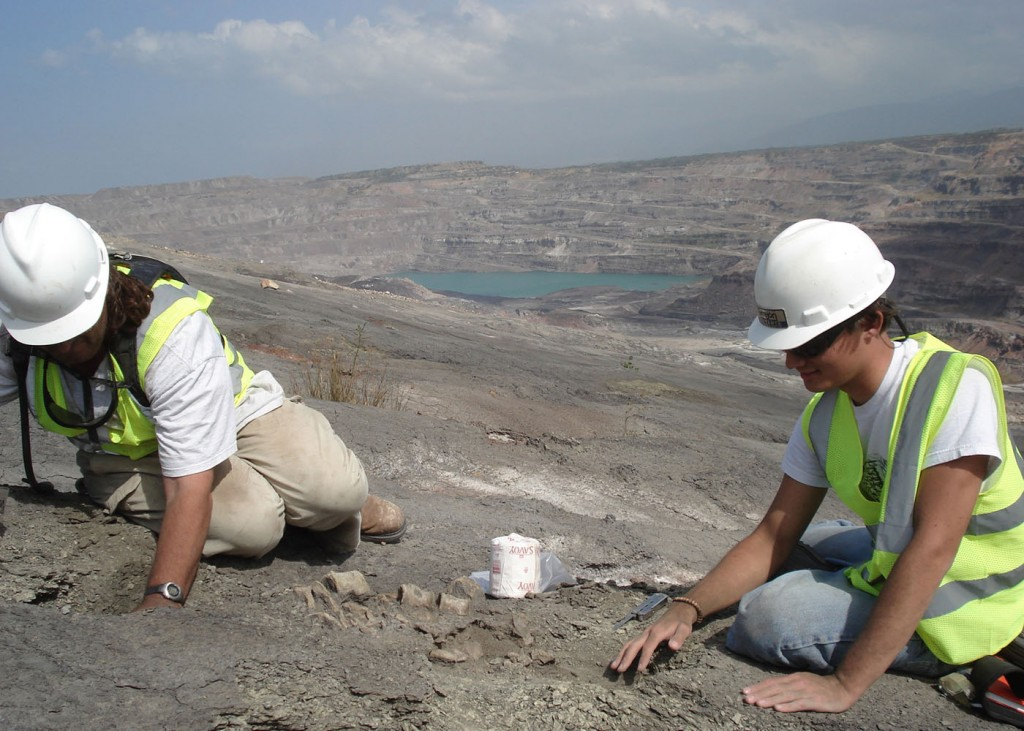 University of Florida researchers Jonathan Bloch, left, and Alex Hastings unearth fossils from the 60-million-year-old Cerrejon formation in northeastern Colombia, one of the world's largest open-pit coal mines. In a study published Sept. 15 in Palaeontology, the researchers from the Florida Museum of Natural History on the UF campus describe Acherontisuchus guajiraensis, an ancestor of crocodiles. Photo taken Jan. 3, 2007.