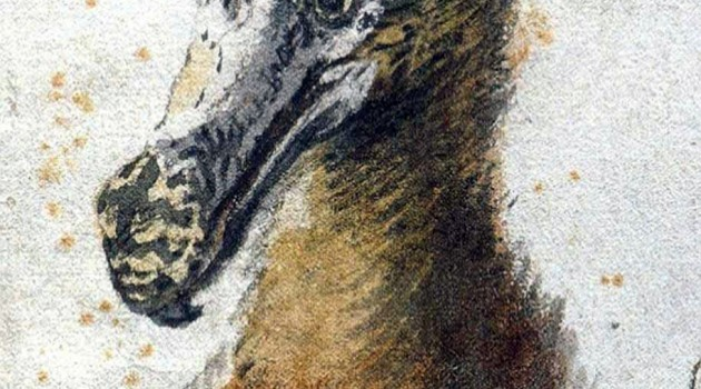 Image right: Painting of a dodo head by Cornelis Saftleven. Done in 1638,  this painting may be one of the last illustrations made of a live dodo. (Image from Boijmans Museum, Rotterdam)