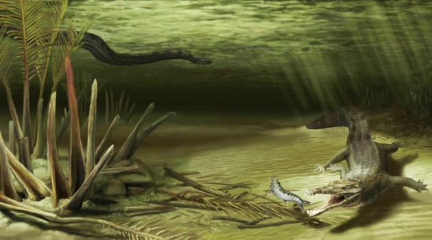 Image right: This illustration shows how Acherontisuchus guajiraensis, a 60-million-year-old ancestor of crocodiles, would have looked in its natural setting. Titanoboa, the world's largest snake, is pictured in the background. (Illustration by Danielle Byerley/click to enlarge)