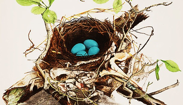 Illustrations of the nest and eggs of birds of Ohio