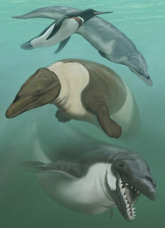 Smithsonian-Peru-Eo-Final-test-8-Sept[1]