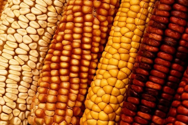 Corn (Photo by Doug Wilson)