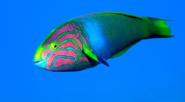 Five funky and 5 fun facts about fishes