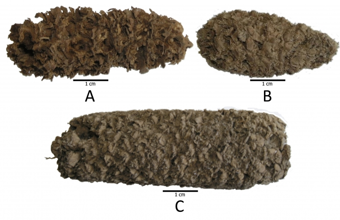 Peruvian-corn-cobs