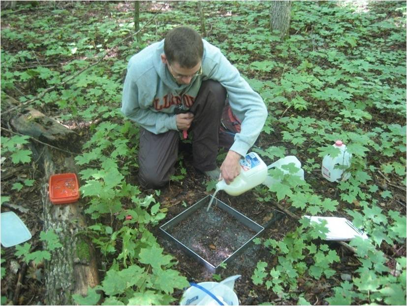 Scott Loss uses a liquid-mustard mixture to sample earthworms.  The mustard contains a skin irritant that causes earthworms to come to the surface. (Photo by Sara Schmelzer Loss)