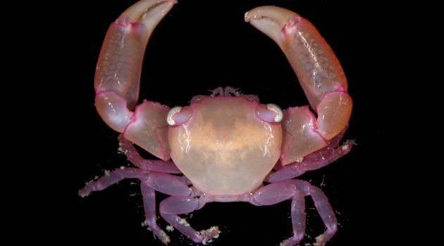 Preventing home invasions means fighting side-by-side for coral-dwelling crabs and shrimp