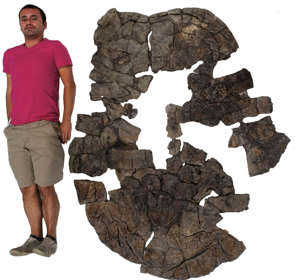 Edwin Cadena, the scientist who discovered the fossil of Carbonemys poses next to its reconstructed fossil shell. (Photo courtesy Dan Ksepka, NC State University)