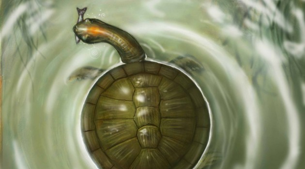 Prehistoric turtle was size and shape of a big car tire